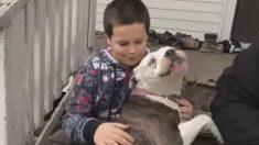 ÉTATS-UNIS - Un pitbull protège un enfant de 9 ans d'un cambrioleur