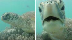 Des plongeurs nagent jusqu'à une tortue sur un récif corallien - surveillez de près la tortue qui se met à « parler »
