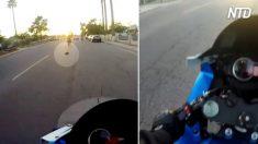 Le motard voit un animal au milieu de la route - quand il se rapproche, il sait qu'il doit s'arrêter et le sauver