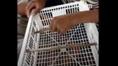 Des garçons ajoutent quelques tiges à une caisse en plastique - mais regardez à quoi elle sert – vraiment ingénieux