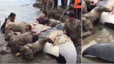 Quand cet animal a été trouvé échoué sur la plage, l'armée a dû être appelée