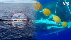 Des navigateurs entendent des cris de détresse sous l'eau, puis ils voient cette créature colossale et plongent au cœur de l'action