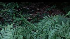Un homme se promenant dans la forêt voit une plante lui faire signe de loin - regardez cette vidéo étonnante