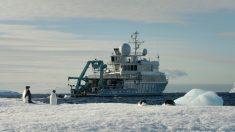 À 1 000 m de profondeur en Antarctique, des plongeurs découvrent quelque chose de surprenant – ils ne s'attendaient pas à trouver cela