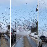 Une volée d'oiseaux bloque une route enneigée, apportant une atmosphère mystérieuse