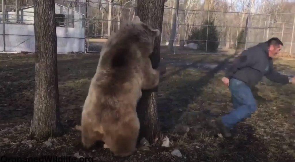 l homme court car un ours le poursuit par derri re mais ce qui arrive quand il se fait attraper. Black Bedroom Furniture Sets. Home Design Ideas