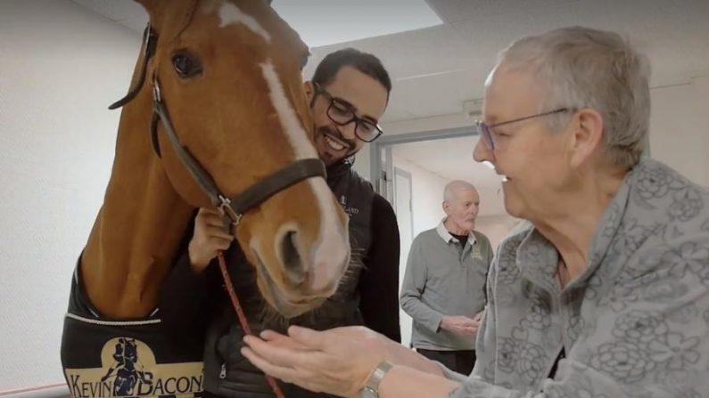 CALAIS – Un cheval se promène dans un hôpital et sème de «petits miracles» chez les patients