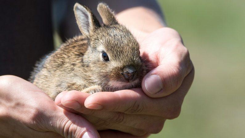Le Parlement européen veut abolir tous les tests de produits cosmétiques sur les animaux