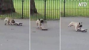 On dirait une journée normale dans le parc, mais lorsque ce visiteur passe à toute allure, c'est un véritable exploit
