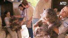 Les touristes adorent caresser ce wombat géant australien. Un petit tour en chariot et le voilà comblé de joie
