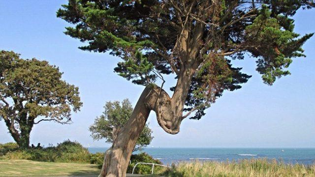 Ces arbres aux formes étranges ne sont pas des «erreurs de la nature», regardez de plus près, ce n'est pas une coïncidence