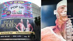 Exposition de cadavres controversée en Australie. Un appel est lancé à la police pour une enquête d'urgence