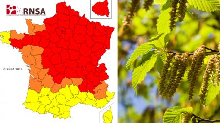 Paris: record de concentration de pollen de bouleaux