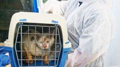 Plus d'une dizaine d'animaux maltraités ont été sauvés du domicile d'une retraitée