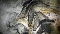 Préhistoire: des fusains de pin «fabriqués maison» par les peintres de la grotte Chauvet