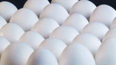 États-Unis: 200 millions d'œufs rappelés à cause de craintes sur des salmonelles