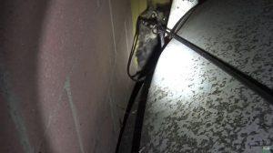 Un chien abandonné et terrifié se cache dans un endroit très étroit – les secouristes ont donc dû être astucieux
