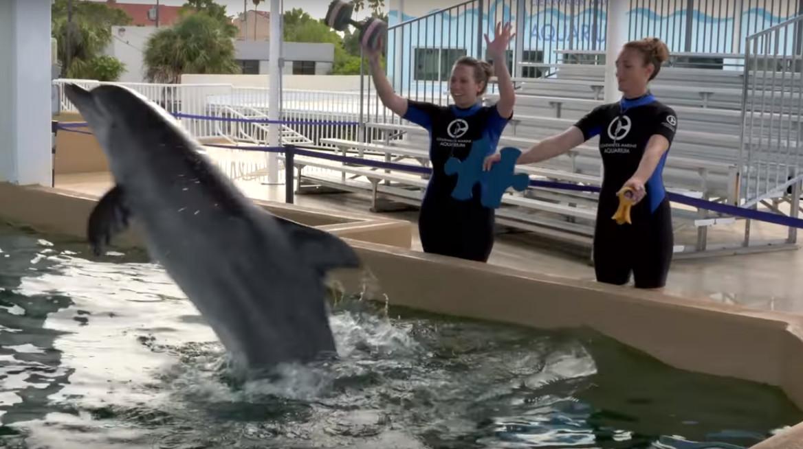 Un dauphin est trouv avec des br lures au 2e et 3e degr for Brulure et piscine