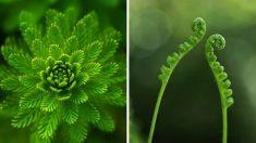 Les plantes peuvent prendre des décisions et apprendre : l'intelligence du monde végétal