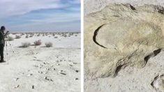 Une ancienne empreinte humaine nichée à l'intérieur de celle d'un paresseux géant suggère une chasse ou une traque