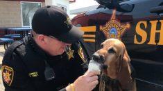 États-Unis: Un chien célèbre sa retraite avec un bol de crème glacée bien méritée