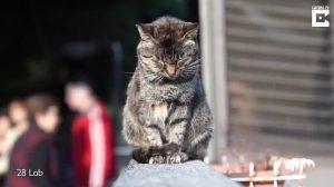 Une ville est appelée le village des chats – lorsque vous rencontrerez ses habitants à fourrure, vous comprendrez pourquoi