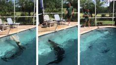 États-Unis : un alligator qui s'est invité dans une piscine est retiré avec l'aide d'un professionnel
