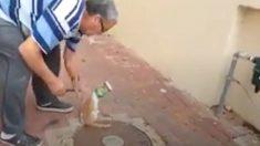 Un homme trouve un chat avec une chose étrange sur la tête. Quand il l'enlève, le chat réagit immédiatement