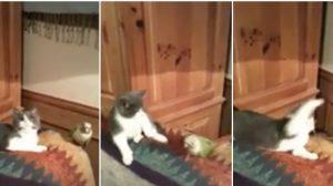 Un oiseau et un chat semblaient être amis. Mais lorsque l'oiseau mord sournoisement l'oreille du chat, la bataille commence