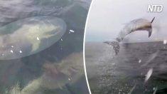 Des plaisanciers attirent l'attention de centaines de résidents de l'océan - puis ça devient un peu incontrôlable !