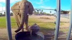Pourquoi les éléphants ont-ils rarement le cancer ?