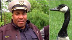 Une oie vient voir un policier pour lui demander de l'aide – l'homme comprend qu'il doit la suivre