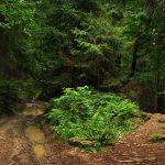 La forêt française aurait presque doublé en un peu plus d'un siècle – on plante plus d'arbres qu'on en coupe!