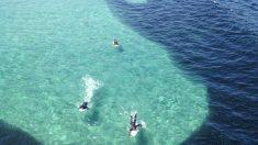 Les surfeurs aperçoivent une ombre gigantesque qui se rapproche du rivage – mais quand ils découvrent ce que c'est, ils sont stupéfaits