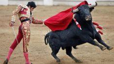 Feria de Nimes: Paméla Anderson dépose une pétition contre la mise à mort des taureaux