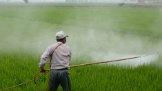 Le gouvernement se refuse à interdire le glyphosate dans le projet de loi