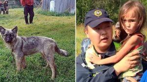 Un chien dévoué mène les sauveteurs à une fillette de 3 ans perdue dans la nature sibérienne pendant 12 jours et 12 nuits