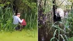 Cet homme marche courageusement à travers des eaux infestées d'alligators - regardez de près lorsqu'il tire ceci d'un arbre