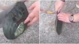 Une femme essaie d'ouvrir une énorme palourde. Quand elle l'ouvre enfin, elle en a pour sa peine