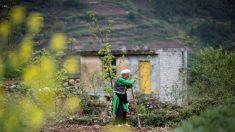 Chine: 10 ans après, des rescapés du séisme s'accrochent aux ruines