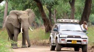 Après avoir reçu une balle dans la tête, cet éléphant s'est approché des humains pour leur demander de l'aide