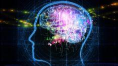 Le QI des humains n'a cessé de baisser depuis 1975, d'après une étude