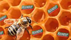 Du glyphosate dans du miel:  des apiculteurs portent plainte contre Bayer
