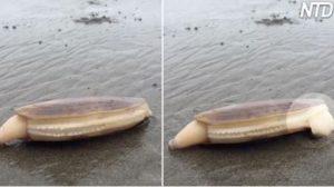 Un promeneur sur la plage aperçoit une palourde étrange – mais soudainement, elle commence à faire des «bruits bizarres»