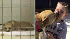 Un pitbull rescapé refuse tout contact avec les humains – puis un garçon de 7 ans entre et tout change