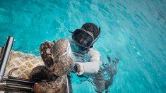 Pacifique Sud : la marine française contre les pêcheurs illégaux d'holothuries