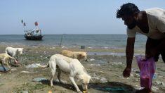 Au Pakistan, des îles aux chiens, nourris par des pêcheurs
