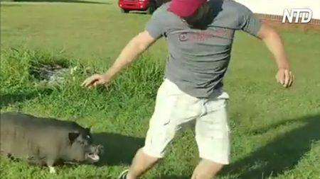 12 moments palpitants d'humains « jouant» avec des animaux – vous ne voudriez pas être à leur place