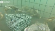 Un homme fabrique un piège à crabes – quand vous verrez comment il fonctionne, votre mâchoire tombera