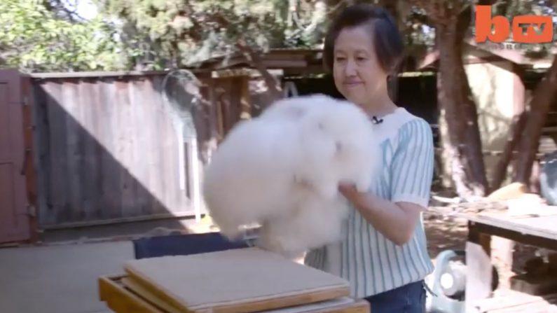 On dirait que cette femme porte une énorme boule de poils. En y regardant de plus près, c'est fou
